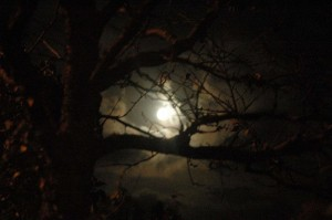 Moon through Tree at Night